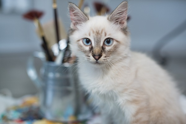 © Corner House Photography | Special needs kitten, cat-lifestyle-photography