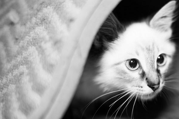 © Corner House Photography |Florida lifestyle-pet-portraits