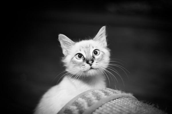 © Corner House Photography | black white portrait of kitten