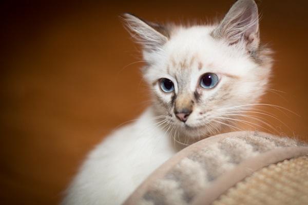 © Corner House Photography | professional pet photography