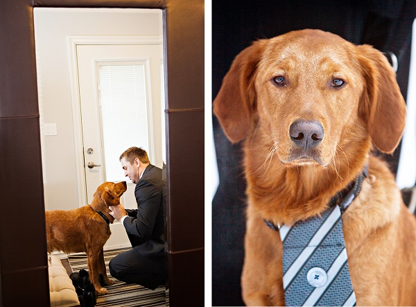 © Creationsphoto | handsome dog wearing tie, wedding dog,, dog and groom