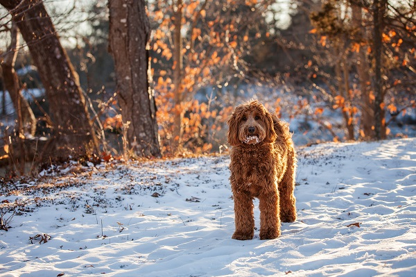 © Kathryn Schauer Photography| amazing photography of dogs in winter/snow