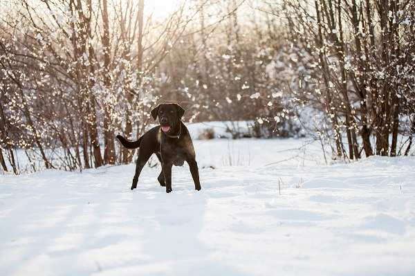 © Kathryn Schauer Photography |Winter dog photography, snow dog, CT-dog-photographer