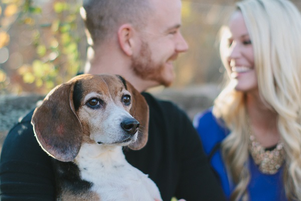 © Robyn Icks Photography | Daily Dog Tag |Beagle-lifestyle-family-photo-session, ideas for engagement photos with dog