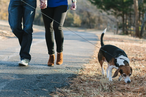 l© Robyn Icks Photography | Daily Dog Tag |ifestyle-family-portraits, couple walking their dog