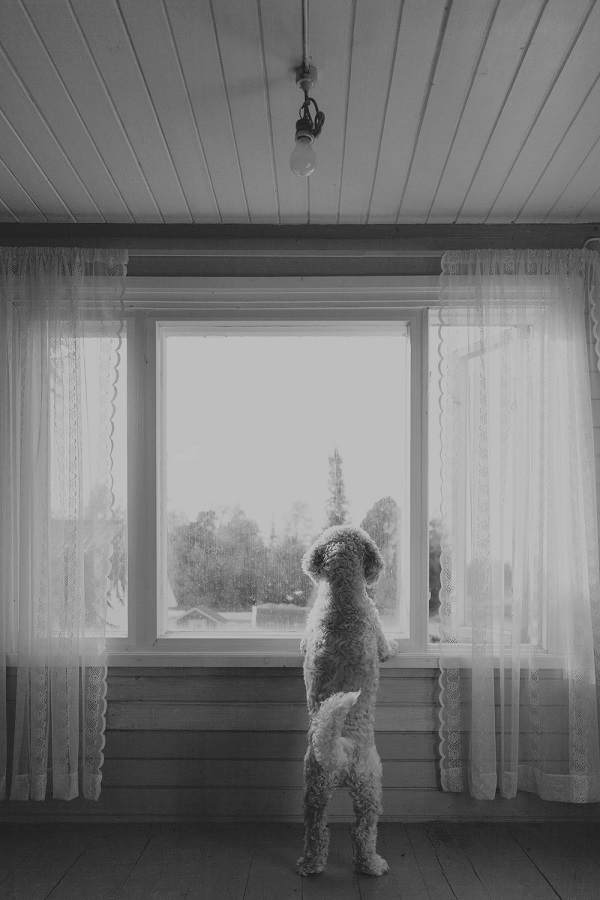 © Toast Photos | lifestyle pet photography, Dog looking out window