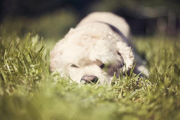 © Toast Photos, | Cocker Spaniel lifestyle photography, Cocker Spaniel puppy photos