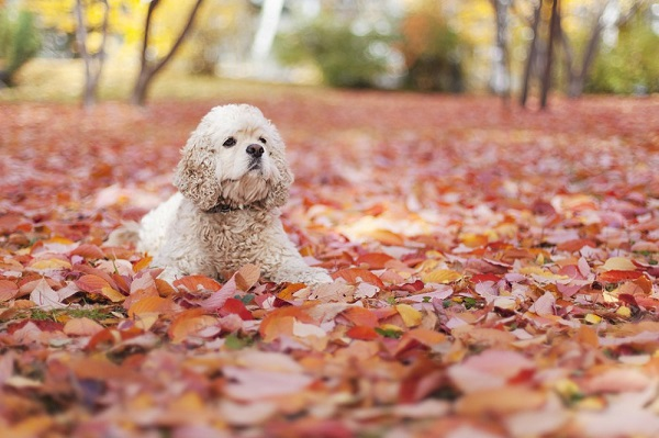 © Toast Photos | gorgeous fall leaves, dog, on location pet photography