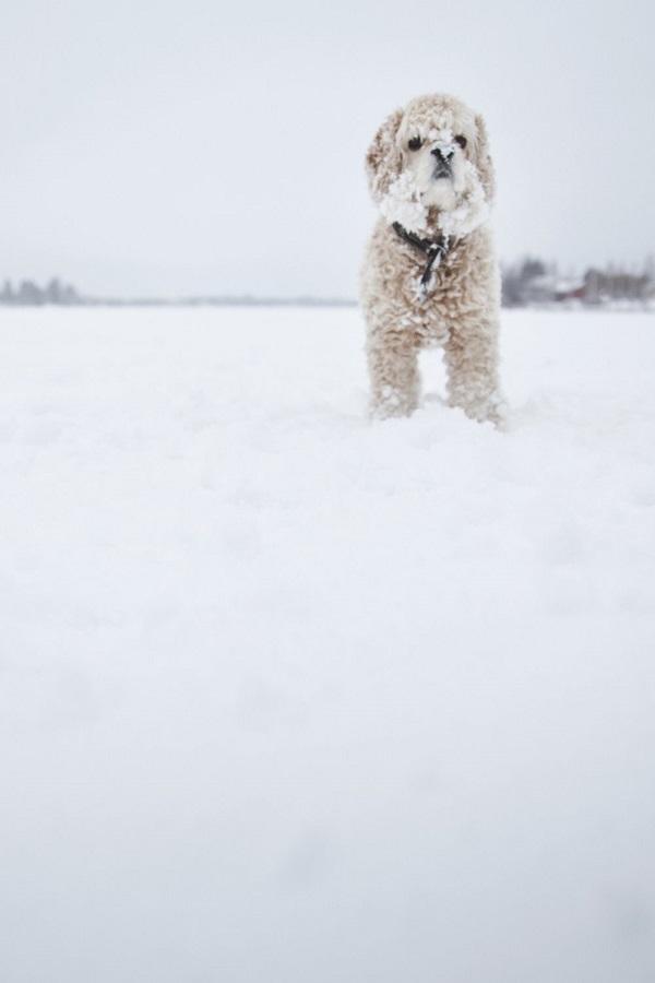 © Toast Photos | lifestyle dog photography,