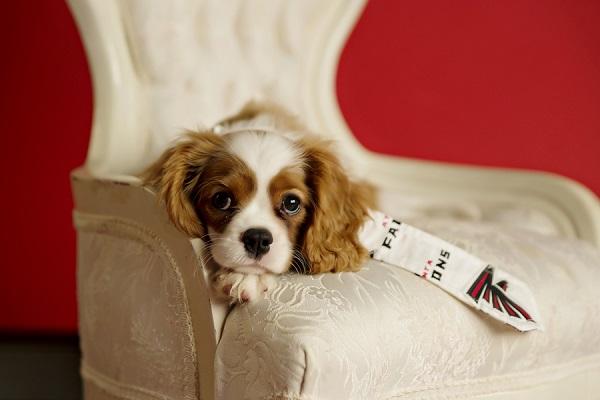 © Andie Freeman Photography | Atlanta Falcons #1 puppy fan