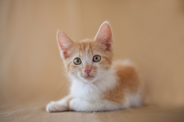 © B Brinston Photography | photographer helps adoptable kittens