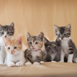 adorable photos of kittens, studio pet photographer