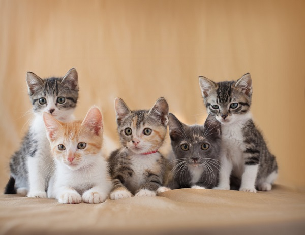 © B Brinston Photography , adorable kitten photos