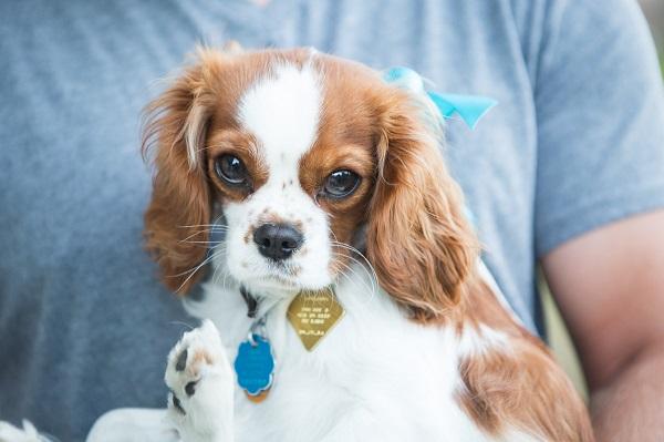 Dog Pawty:  Darla