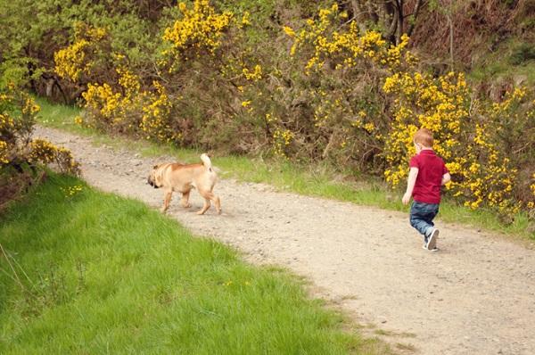 © Catharine Noble Photography | lifestyle dog and family portraits