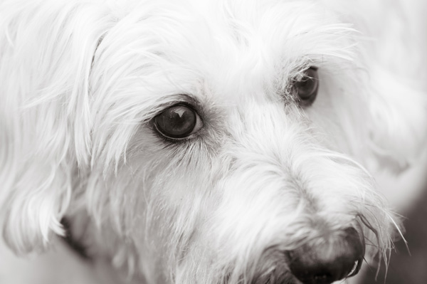 © Alice G Patterson Photography | Lifestyle dog photography