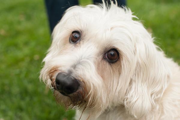 © Alice G Patterson Photography | Arlington pet photography, on location dog portraits