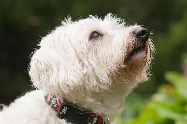 © Alice G Patterson Photography |  Arlington VA lifestyle dog photography