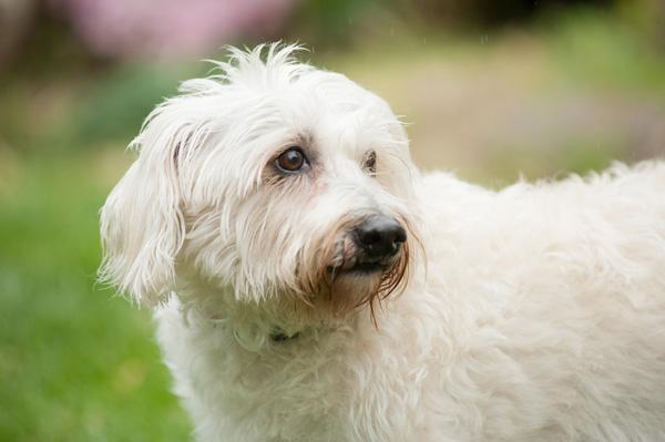 © Alice G Patterson Photography | on location dog photography, Syracuse dog portraits, VA dog photographer