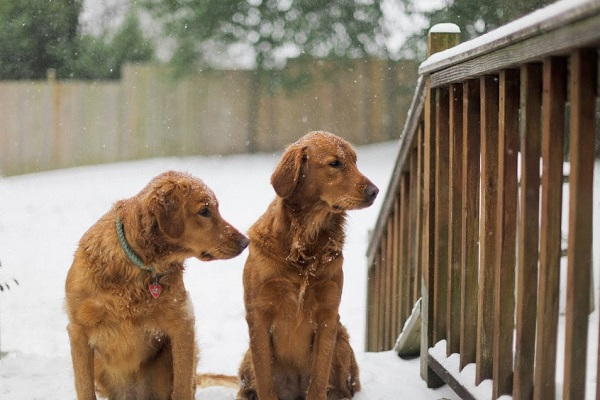 © Irrelephant | dogs in snow, Birmingham snow