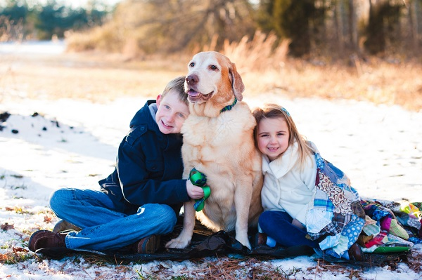© Laura Matthews Photography | Senior Yellow Labrador, Family-pet-lifestyle-photography