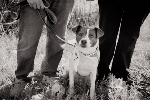 © Denver Paws Photography denver-photography-engagement-dog-family-sloans-lake-pets-7