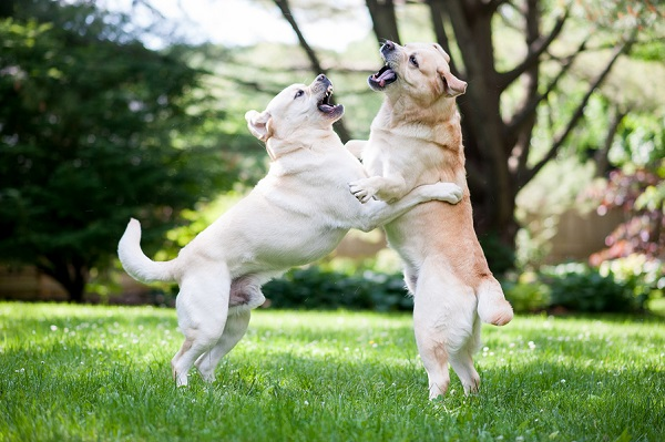 © Origin Photo | dogs playing