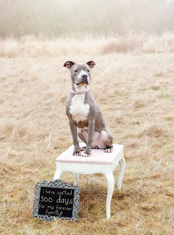 © Two Red Dogs Photography |Adoptable dog from Project Buddy