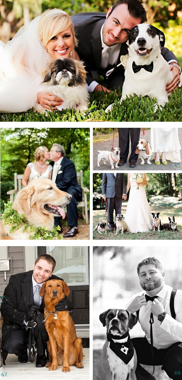 dogs-in-wedding, Pawscar nominations, bride, groom and their dogs