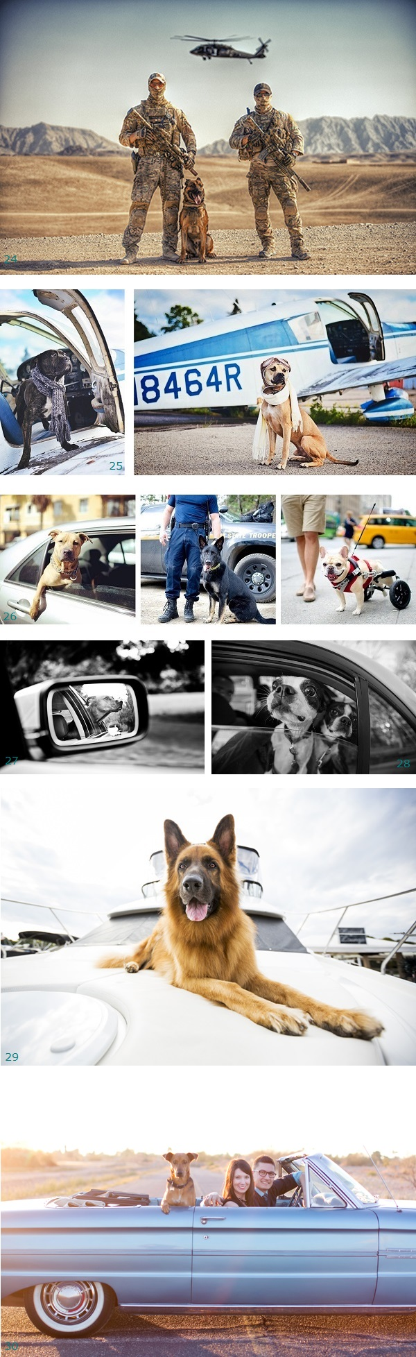 Best Ride: dogs and helicopter, dogs and small plane, dogs in cars, dog with wheels, dog on boat