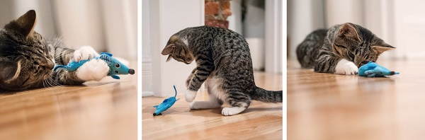 © Chantal Levesque Photo   lifestyle-cat-photos. cat and toy mouse