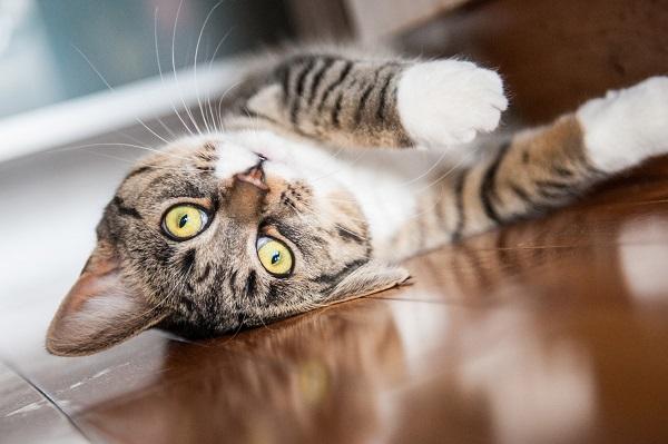 © Chantal Levesque Photo   Montreal Pet photography, lifestyle-cat-portraits