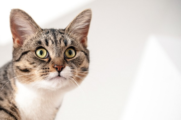 © Chantal Levesque Photo   Montreal Pet photographer, lifestyle cat photography