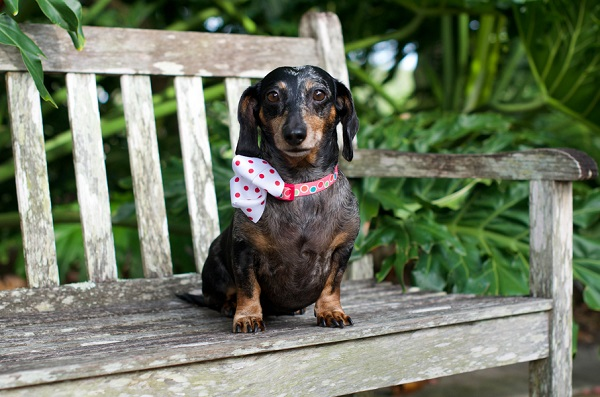 © Corner House Photography | Hot-dog-on-bench, Florida-pet-portraits