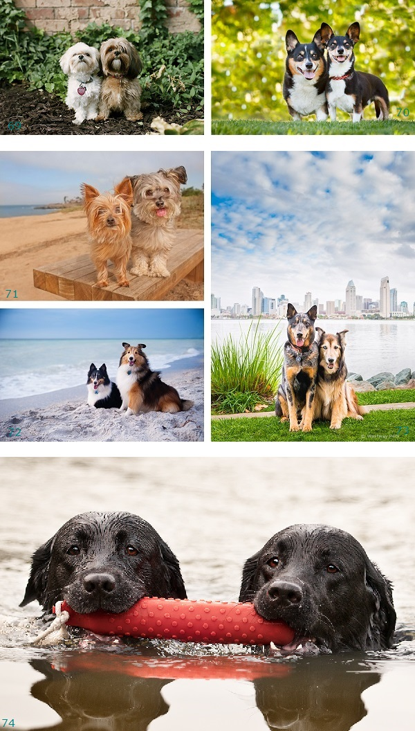 Most Dynamic Dog Duo dog best-friends, dog-siblings, dog-photography