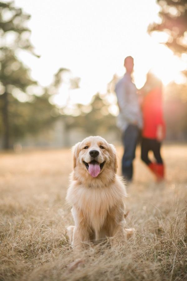 © Elizabeth Henson Photos   lifestyle pet photography,