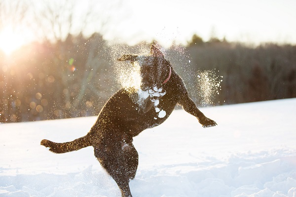 © Kathryn Schauer Photography | photos-of-snow-loving-dogs, on location dog photography