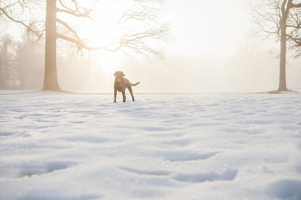 © Kathryn Schauer Photography | stunning dog photography, dog in snow