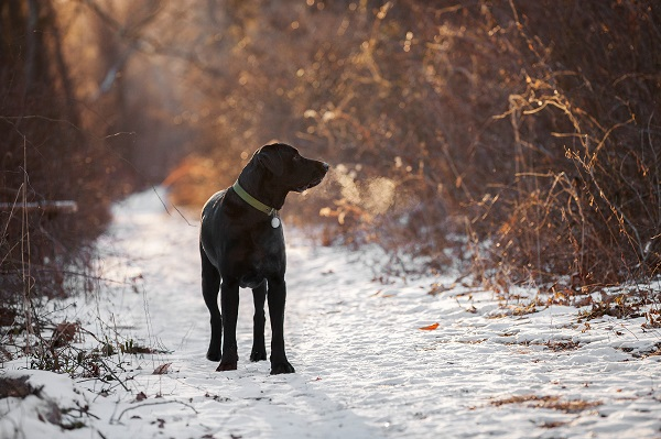 © Kathryn Schauer Photography | Winter Images, handsome dog in winter, Dog-breath-in-winter,