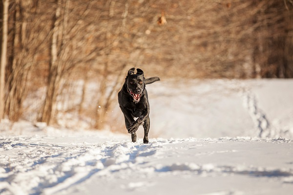 © Kathryn Schauer Photography | pictures of dog loving snow, dog playing in snow