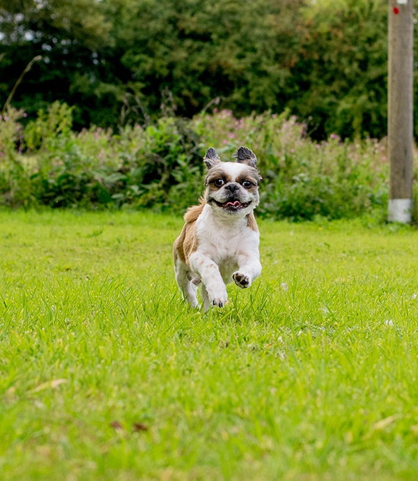 © Lebolo Photography | small dog running in grass