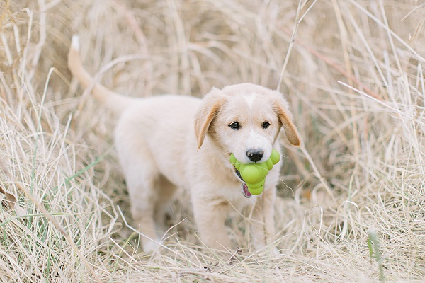 Puppy Love:  Maggi