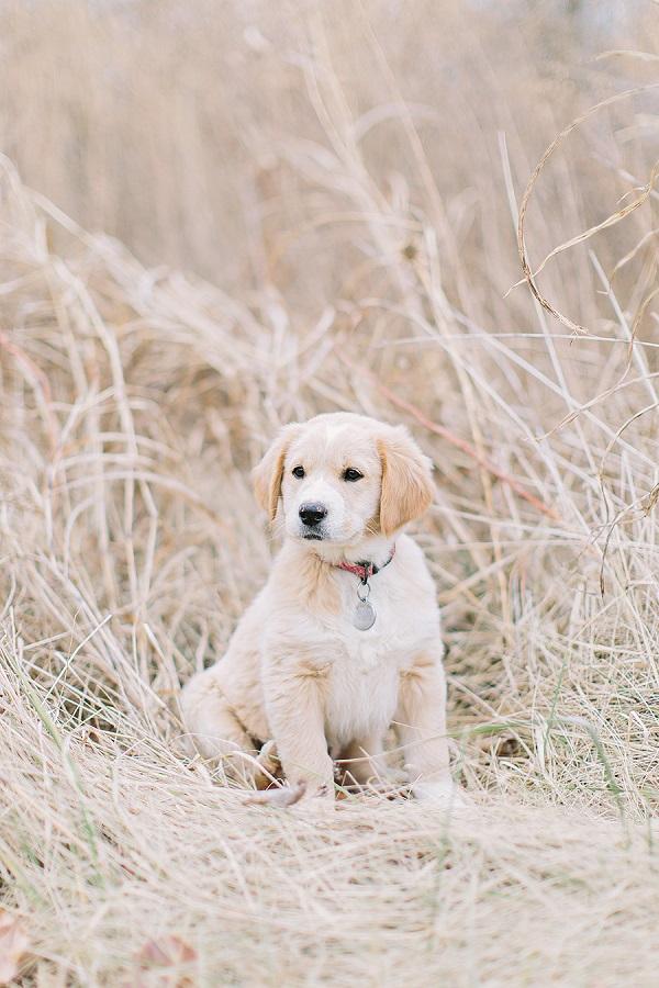Puppy Love Maggi Daily Dog Tag