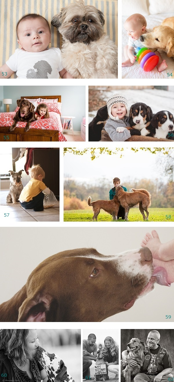Best Supporting Dog-2015 Nominees, dogs,best friends, support, companion, loyal friends, kids and dogs, therapy dog