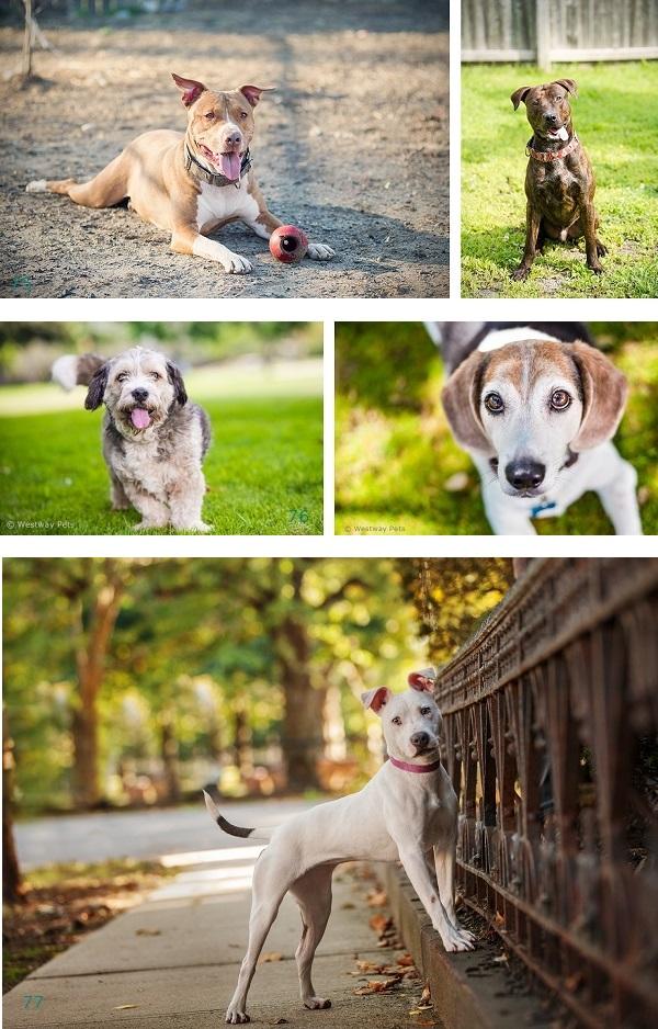 Adoptable dogs, #opttoadopt