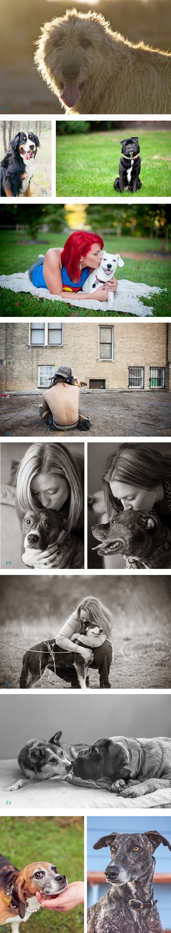 Pawsitively Amazing dogs: cancer survivor, homeless, pit bull ambassadors, therapy dogs,