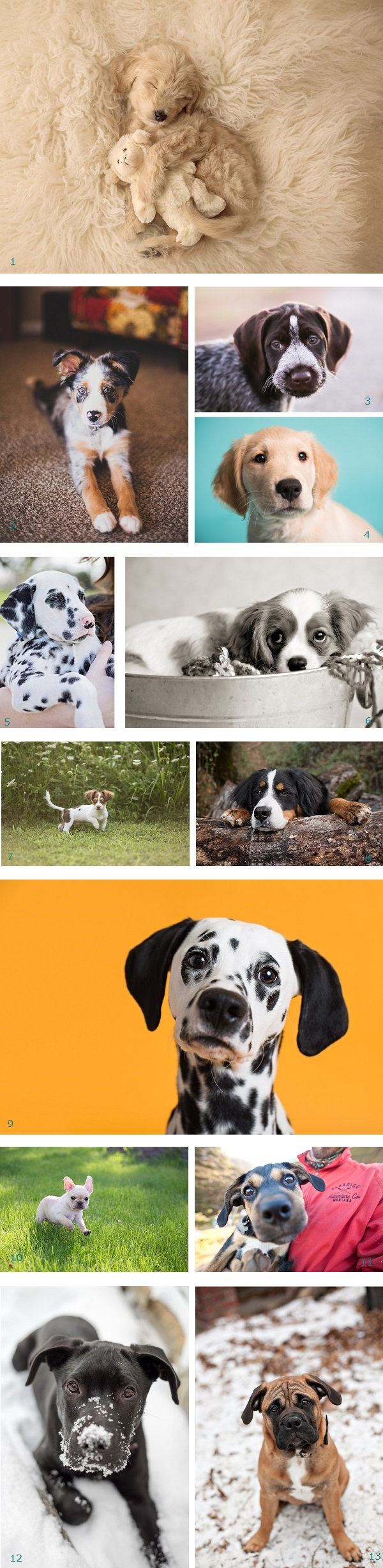 Puppy Love 2015 Nominees for Pawscars