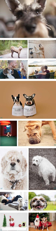 Funny Dog photos, Pawscar Scene stealers