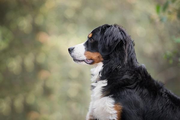 © Sierra Luna Photography | gorgeous dog portraits