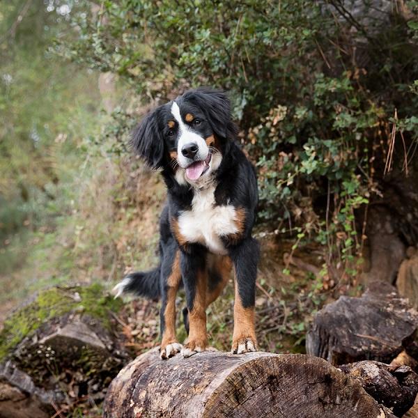 © Sierra Luna Photography | California-pet-photography, on-location-dog-photos